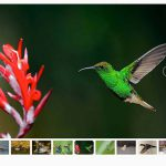 Image Carousel Thumbnail Slider with ACF Gallery Field in WordPress